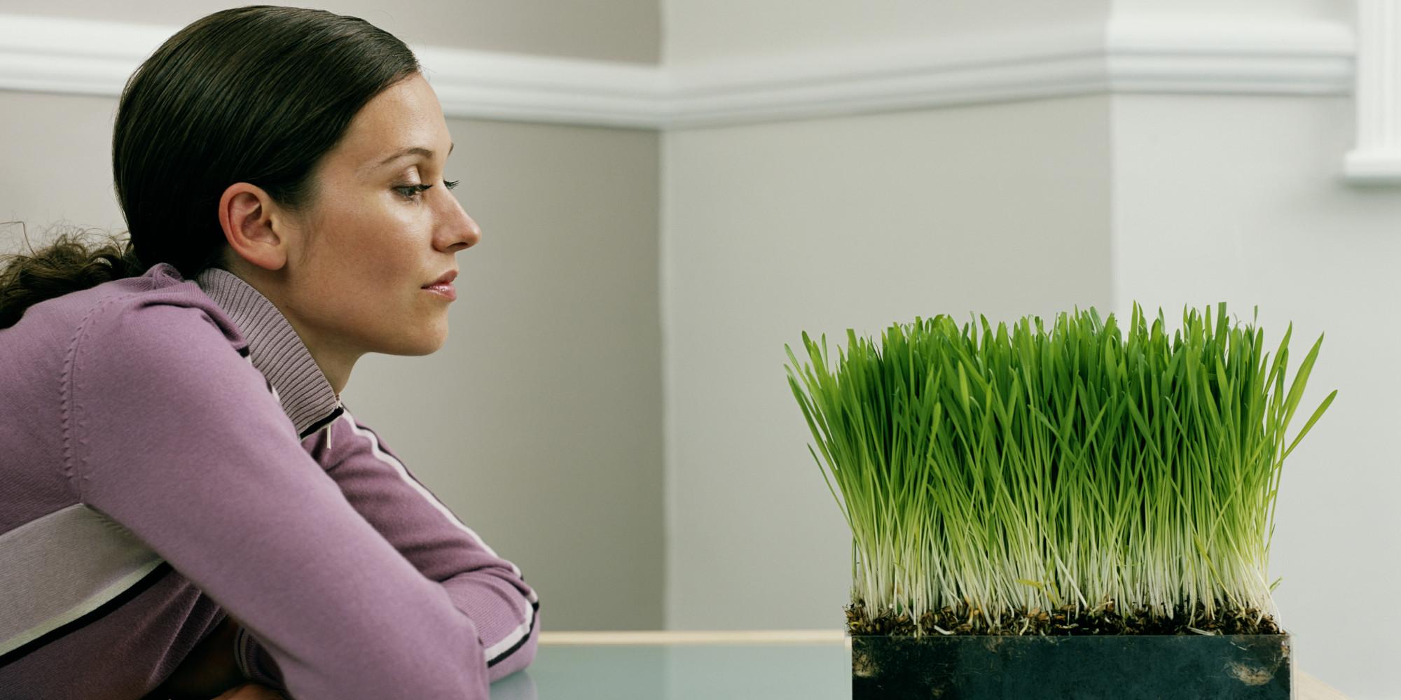 1. Watch Grass Grow