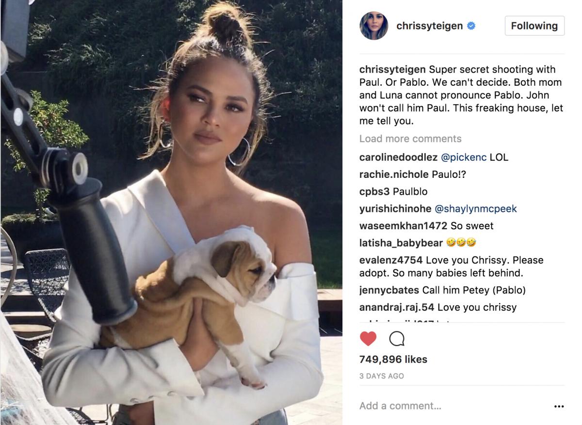 Chrissy Teigen Puppy